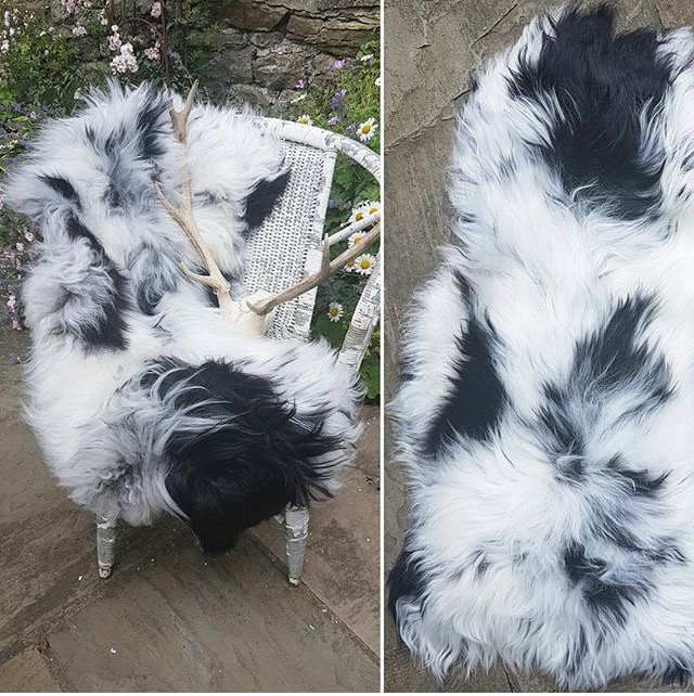 Cowboy Kate Rare-Breed Sheepskin