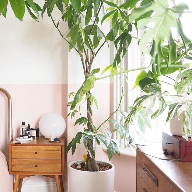 Home Styling Inspiration From Instagram, West Elm, Mid Century planter, plants, house plants, botanical, West Elm UK
